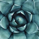 erol-ahmed-80094_160px